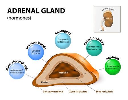 Fibromyalgi alternativ helbredelse. fibromyalgi og binyre træthed